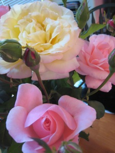 Sending roses out to all my blog readers. Thank you so much for your time and attention.