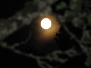 When you wish upon a super moon....... writer dreams can come true. Taken Aug. 10, 2014.