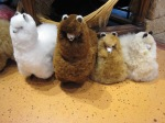 These little alpacas can fit in your apartment. Really.  No feed required.